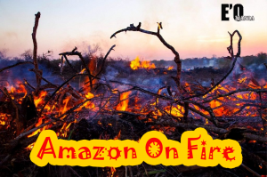 amazon deforestation entertainomania