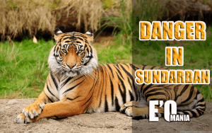 danger in sundarban entertainomania